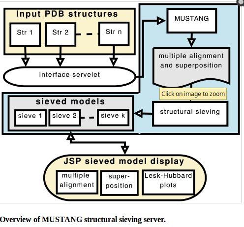 mustang — множественное структурное выравнивание белков